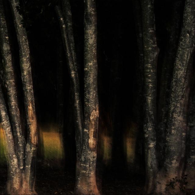 Park Trees at Twilight
