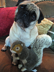 norman and his squirrel