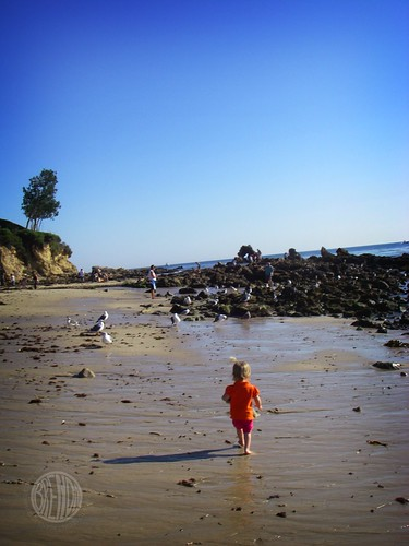 tiny beachcomber