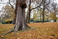 Hyde Park, Autumn