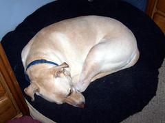 Zeus_sleepy