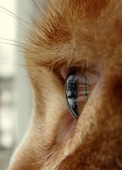 As seen through a cat's eye...