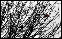 Flight (forzaparibello) Tags: nature birds silhouette photoshop canon rebelxti canonrebelxti bestnaturetnc07