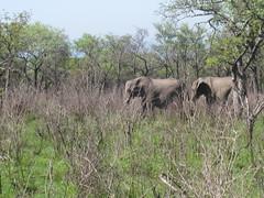 IMG_0325 (michaeldgbailey) Tags: southafrica safari krugernationalpark bigfive
