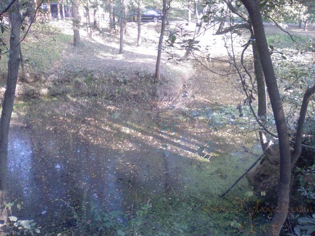 池塘,植物园
