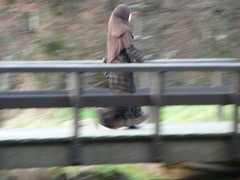 She Flies On Strange Wings (FaceMePLS) Tags: bridge headscarf nederland thenetherlands streetphotography zoetermeer brug bruggetje hoofddoek moslima muslimwoman goldenearring straatfotografie voorweg facemepls panasonictz3