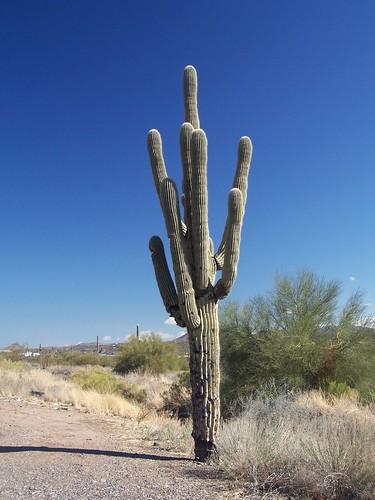 arizona cactus phoenix desert scenic