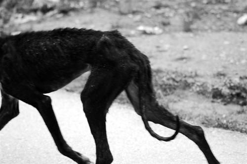Perro abandonado / Nowhere dog