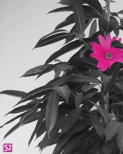 Projekt 52: Blütenpracht