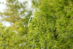 緑の濃淡 / Green