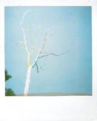 :) (meownet) Tags: polaroid meow rainbowtree hornyteen meownet