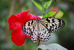 Mariposa del Butterfly Park