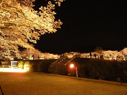 石舞台古墳(夜桜)-02