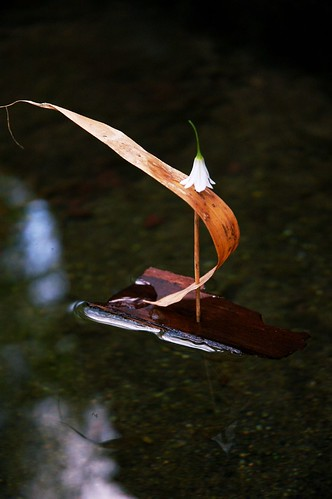 Bamboo leaf & bark boat in a horse trough