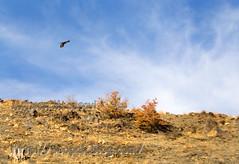 autumn-mohsen moossavi (7)b (Mohsen MoossaviZadeh) Tags: iran  mashhad khorasan  torghabeh