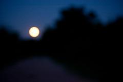 Moon Grove