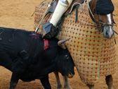 Kinship Circle - 2008-05-22 - 12 - GUESS Brand Sponsors Bullfighting