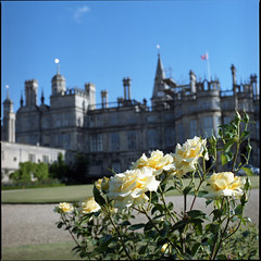 A Rose for the castle (Alvaro's Pix) Tags: uk roses color 120 6x6 mediumformat lincolnshire 120film hasselblad scanned stamford carrete kodakportra400nc burghleyhouse mittelformat epsonv700 formatomedio uk08 hasselblad2000fcw carlzeissplanarf80mmt