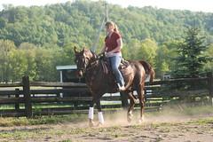 trrresrt (wallsters) Tags: under tress saddle