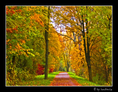 come, take a walk with me... (claudia hering (sundance)) Tags: autumn trees fall bravo colours path orton themoulinrouge naturesfinest magicdonkey mywinners pentaxk110d impressedbeauty aplusphoto thegoldenmermaid thegardenofzen
