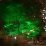 Lighting tree thumbnail