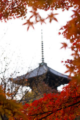 Shinnyodou (yocca) Tags: autumn red leaves japan temple leaf kyoto explore momiji 2007 shinnyodou  nov2007 interestingness1129486