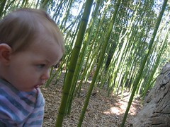 Sophie in the bamboo forest