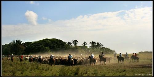 Hato Mata leon, Casanare, Colombia
