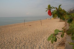 IMG_9504 our beach volleyball field Malawi (majoorpl) Tags: africa afryka