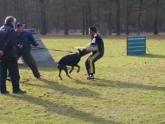 Manwerk2 (Marja S) Tags: protection ipo helper dobermann schutzhund