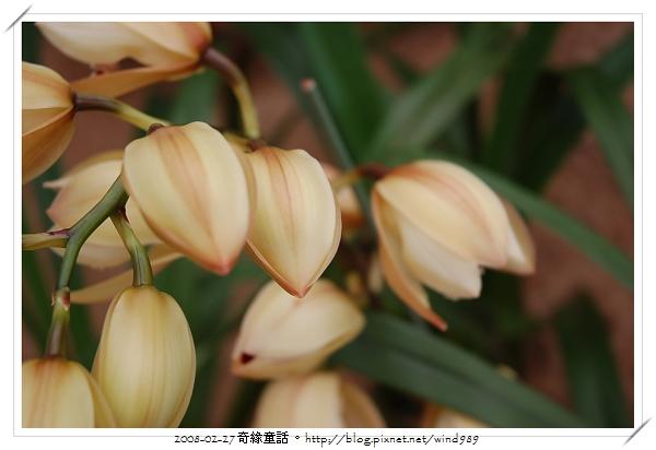 DSC_2586東亞蘭