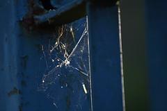 A força da delicadeza (Malu Green!) Tags: blue green azul spider power spiderweb malu malugreen strength delicate delicacy força aranha teia guara delicadeza delicada abigfave guaratingueta8dias