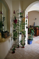 Orchid Wall - 3