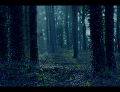 Sound Of Silence (Confused-Hair) Tags: green forest dark gloomy deep eerie soe enchanted treetrunks artisticexpression soundofsilence aplusphoto confusedhair silenceofaforest