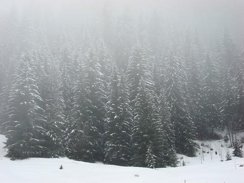 Bosco con la nebbia 3