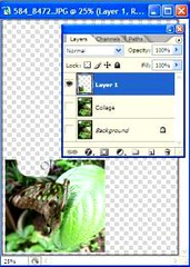 Butterfly collage tutorial - use the Eraser Tool to remove unwanted areas