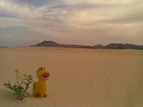 dunas de corralejo, en fuerteventura