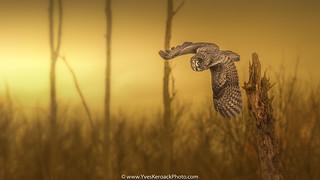 L'heure de la chasse