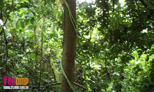 Beautiful nature found in the heart of Bukit Batok