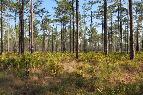 Florida Trail 098