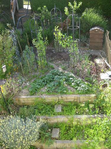 Veg bed 2 June 2011