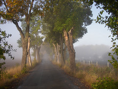 Avenue a misty morning in falltime (Per Ola Wiberg ~ Powi) Tags: oktober beautiful sweden loveit harmony 2007 nationalgeographic musictomyeyes aclass awesomeshot blueribbonwinner autumnfall supershot eker beautyisintheeyeofthebeholder flickrstars artistoftheyear flickrgoldaward topofthefog impressedbeauty flickrhearts ultimateshot ekebyhovsalln theothervillage superhearts flickrbronzeaward flickrsilveraward heartawards diamondstars empyreanlandcityscapes eperke flickrsun flickrsheaven wonderfulworldmix natureiswonderful goldstaraward bestofautumnandwinter2007 flickrestrellas ~nature picswithsoul littlestoriespicswithsoul peaceawards highqualityimage beautifulshot fabulousflicks fotosconestilo panoramafotogrfico platinumgolddoubledragonawards doubledragonawards photographerparadise tophonorofphotographerparadise angelawards dragonflyawardsgroup visionaryartsgallery diamantefotosatuestilo platinumpeaceaward universeofnature diamondgolddoubledragonawards ~exclusivity~ angelgallery flickrsgottalent flickrssuperstartalent visionaryartsgalleryplatinumgold mygearandme mygearandmepremium mygearandmesilver mygearandmegold mithopeesperana naturesanctuary thenaturessoul level3photographyforrecreationgold