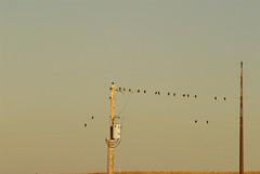 DSC_0027.JPG (webber0075) Tags: autumn usa bird fall nature leaves birds animals evening leaf colorado brighton poles d200 adamscounty commercecity goldenlight nearbarrlake unincorporatedarea