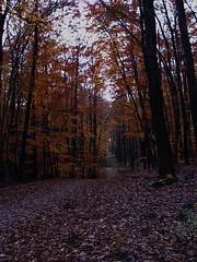 DSC00777_a (zobl_vienna) Tags: autumn dsch3