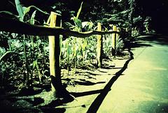 boundaries (revisited) (Stitch) Tags: forest lomo lca xpro philippines expired fairview quezoncity ecopark lamesadam fujisensia100f