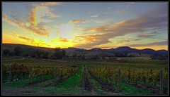 Napa Sunset (requiemjp) Tags: california ca travel sunset fall landscape 350d vineyard vines winery napa hdr 2007 carneros mywinners aplusphoto