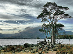 Killarney Trees (Pockets1) Tags: trees ireland jason mountains landscape lumix town lakes dramatic kerry panasonic killarney thumbsup 2007 masterclass twothumbsup blueribbonwinner  tonemapped dmcfz8 plantabillion pockets1 jasontown