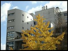 (jili'm **) Tags: autumn trees paris building fall yellow ginkgobiloba paris13