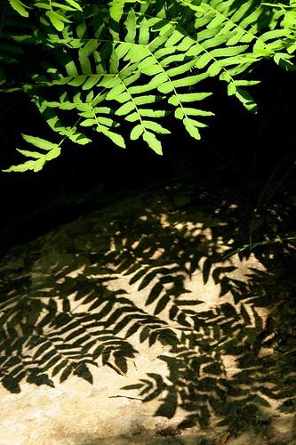Sombras e luces da vida