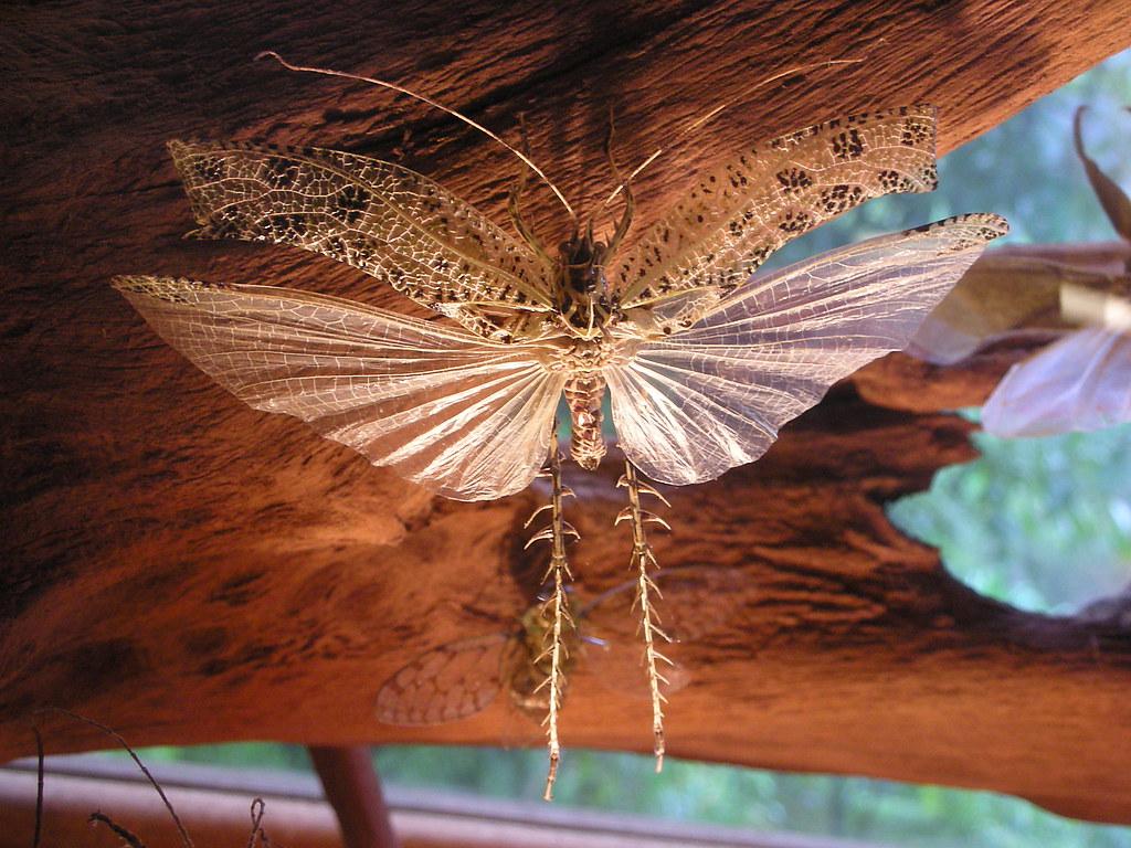 Wacky museum bug